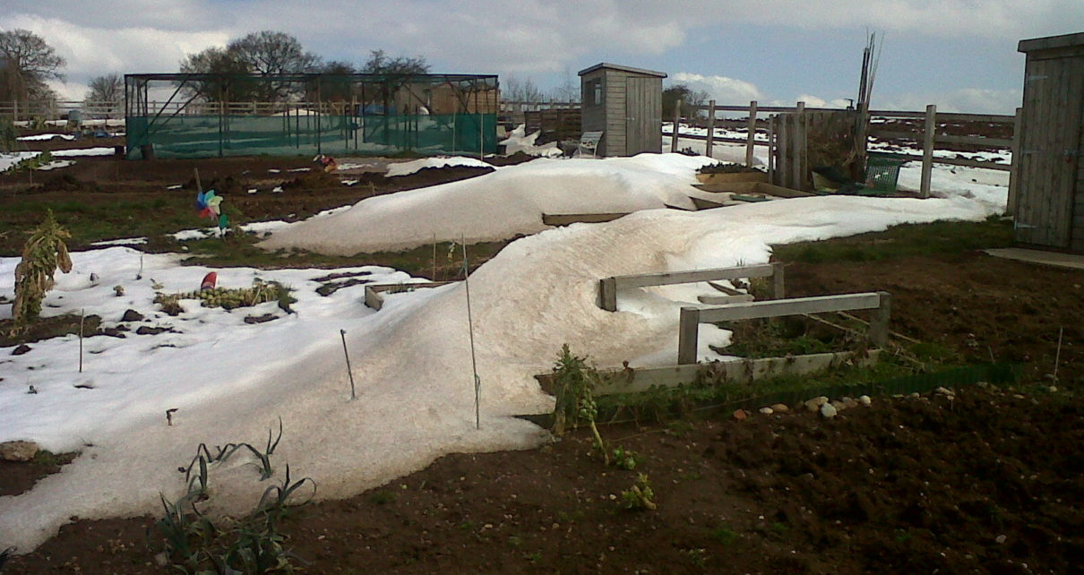 snowy allotment image