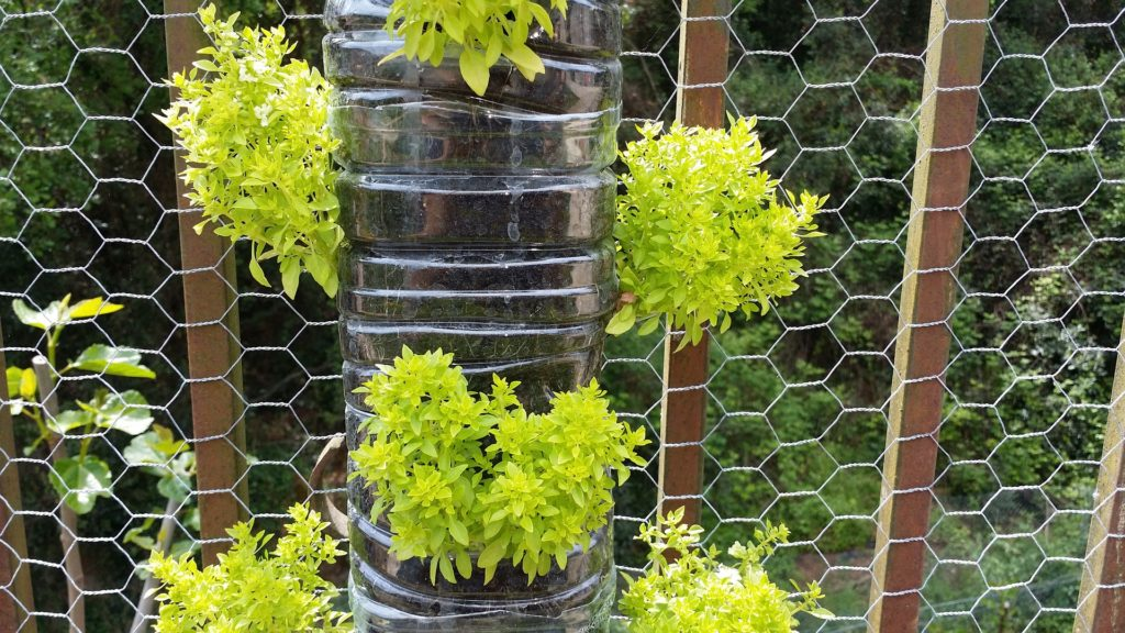 Vertical garden in stacked plastic bottles