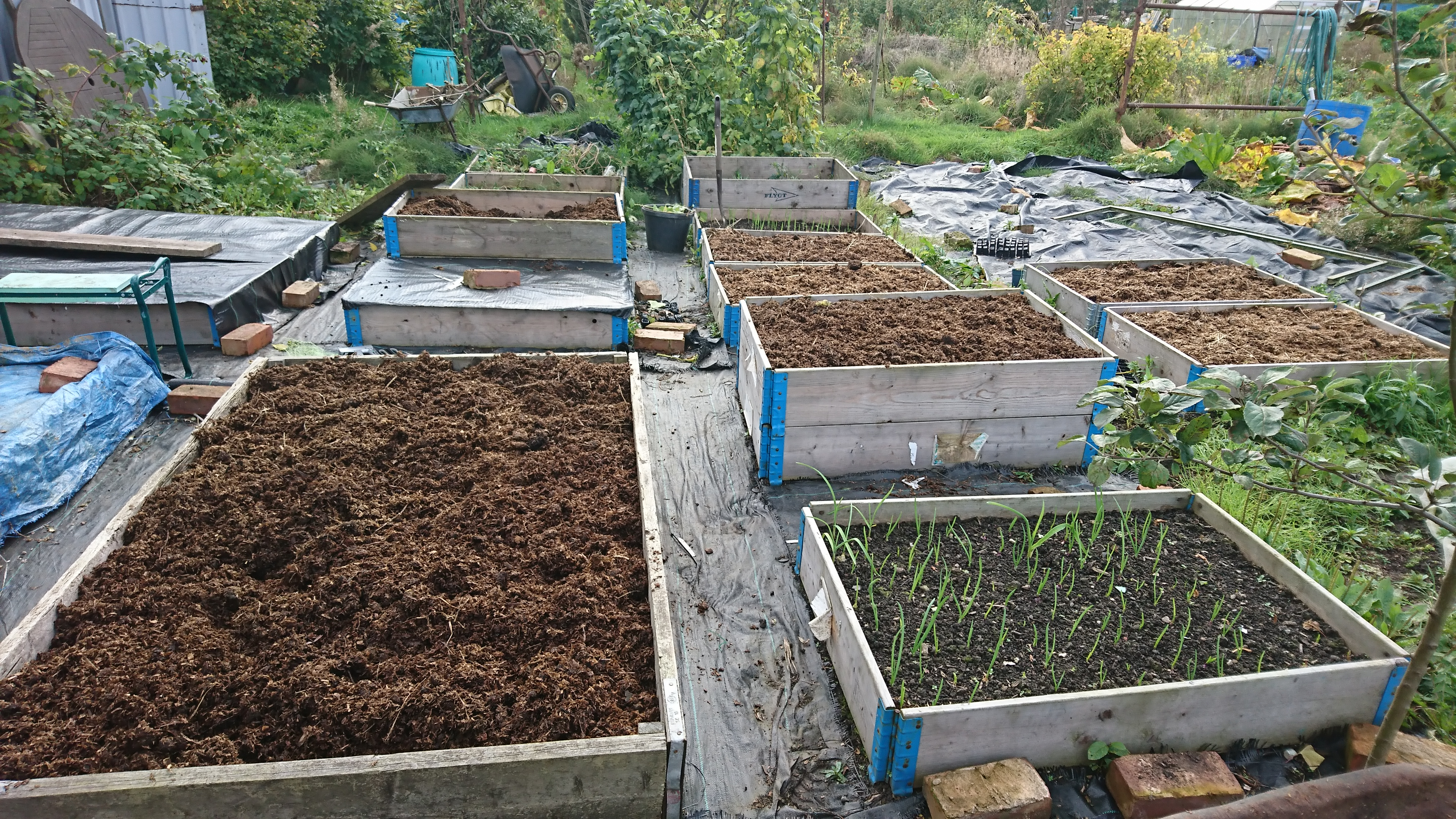 raised beds filled with manure