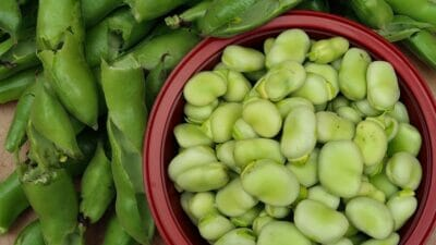 broad beans harvested